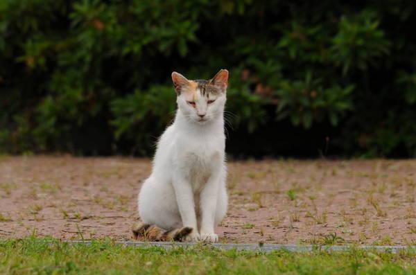 0001猫180605_785.JPG