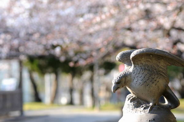 0001鳥に桜1.JPG