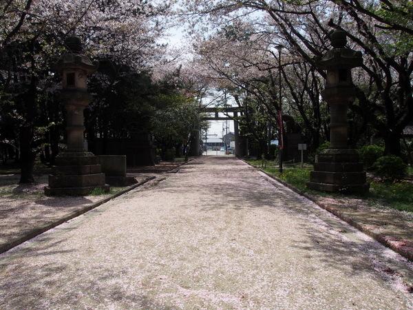 桜大山160409-5.JPG