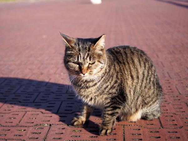 猫にゃーん.jpg